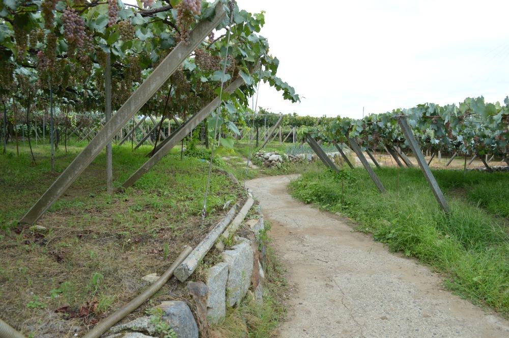 Katsunuma Walk